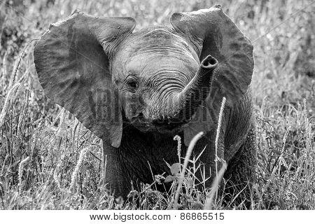 Very Cute Curious Baby Elephant