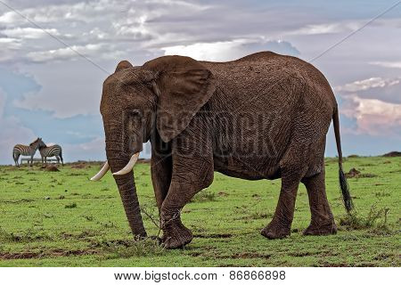 Elephant grazing against backdrop of Sunset and light passing through clouds