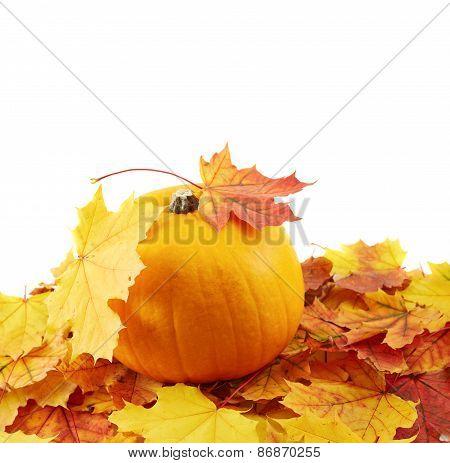 Orange pumpkin against maple-leaf composition