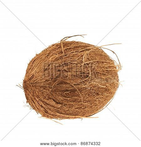 Whole coconut fruit isolated