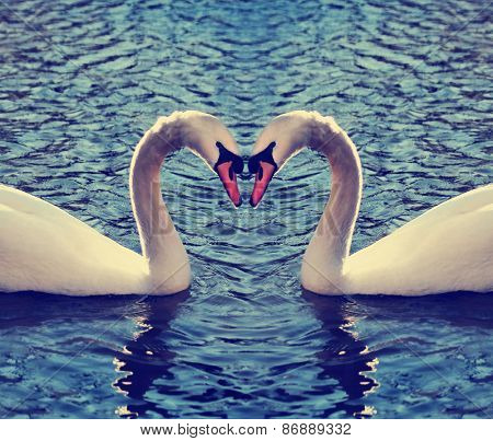 two swans in a blue lake or river making the shape of a heart with their necks toned with a retro vintage instagram filter effect app or action