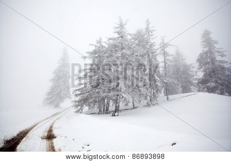 Winter background with snowy fir trees