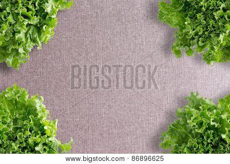 Crisp Fresh Frilly Green Lettuce Corner Border