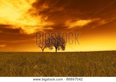 Field,trees,sunset