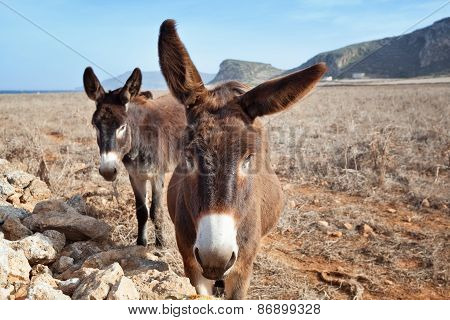 Couple Of Donkeys