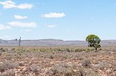 image of three sisters  - Typical arid Karoo landscape between Richmond and Three Sisters - JPG