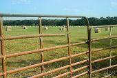 Hay Through Fence