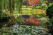 stock photo of garden eden  - Quiet pond - JPG