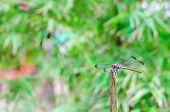 foto of dragonflies  - Close - JPG