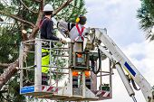 stock photo of man chainsaw  - professional lumberjacks on an elevated work platform who cutting trunks on the top of a big tree with a chainsaw - JPG
