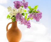 stock photo of may-flower  - Flowering branch of lilac in a clay jar close - JPG