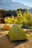 foto of pomegranate  - tent in the pomegranate orchard with riped pomegranates - JPG