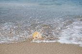 stock photo of under sea  - nautilus shell with sea wave - JPG