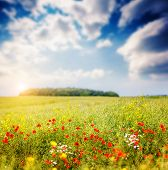 picture of cumulus-clouds  - Fantastic closeup sunny grass and red poppies - JPG