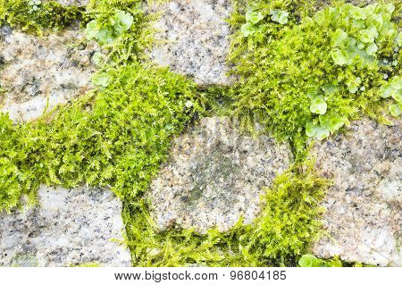 Vegetation among stones