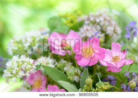 wild rose and herbal flowers