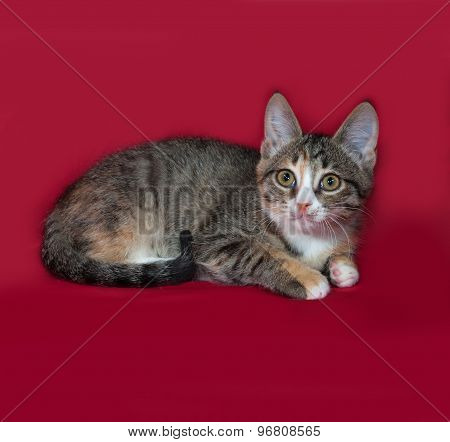 Tricolor Kitten Lying On Red