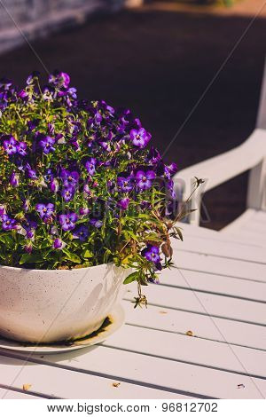 Pansy in a ceramic flowerpot on a table