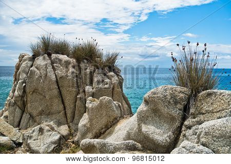 Sea rocks and mediterranean dry grass at morning in Sithonia