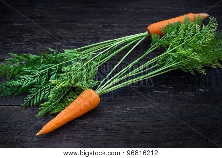 Fresh Organic Carrots With Leafy Tops
