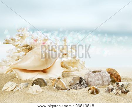 Sunny beach with shells