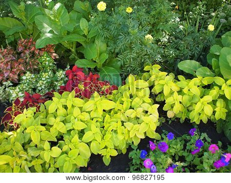 Top View Of Multicolored And Colorful Flower Bed