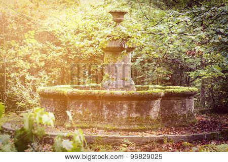 Magical Old Fountain Overgrown With Moss And Sunbeams