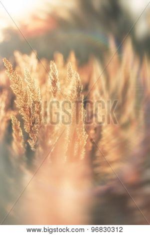 Sunset in high grass - grass seeds