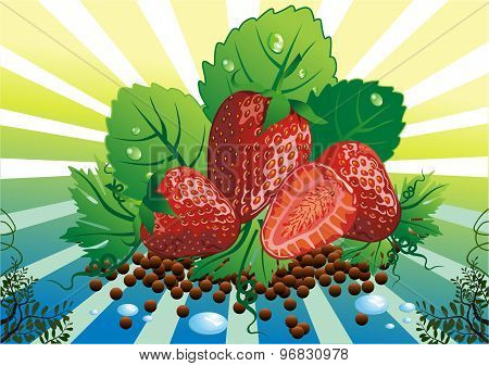 Still Life - Strawberries On The Vine Leaves [