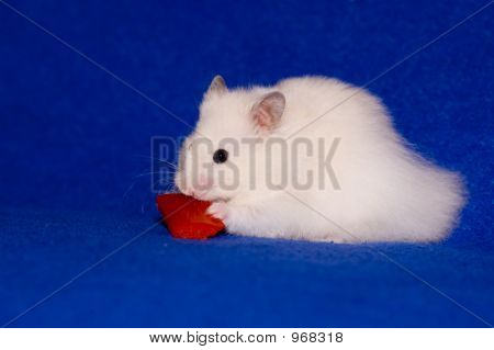 Hamster With Pepper Isolated On Blue Background
