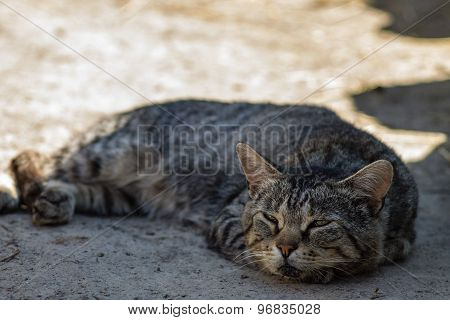Cat Half Asleep