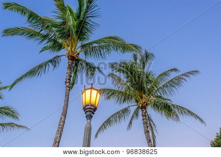 Vacation, resort city with palm and light at night view.