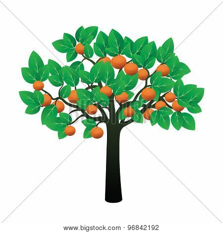 Orange Tree And Fruits.