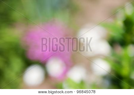 abstract natural green pink background. boke