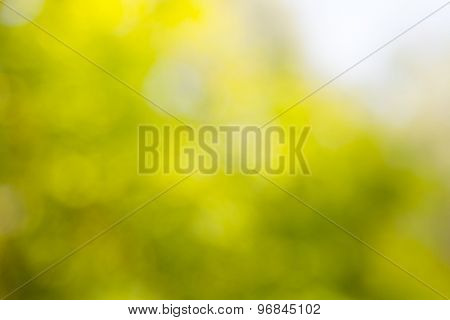 abstract natural green yellow background. boke