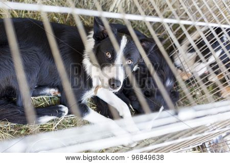 Homeless Dogs In Cages