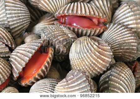 Monster Clams
