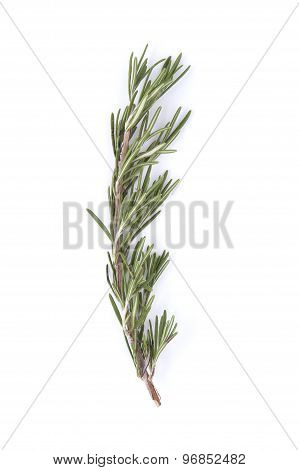 The Branch Of Rosemary On A White Background..
