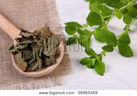 Fresh And Dried Lemon Balm With Spoon On White Wooden Table, Herbalism