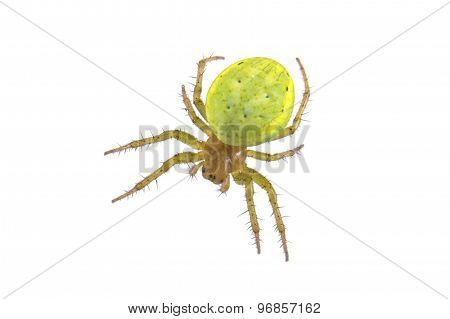 Green Spider On A White Background