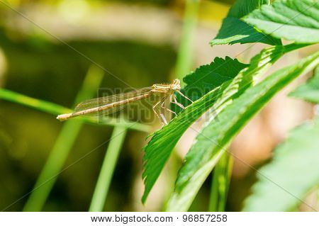Grey Dragonfly Sitting On The Plant