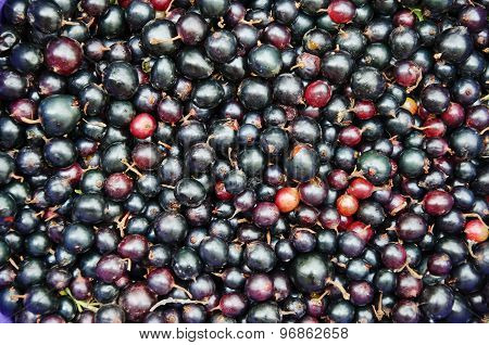 Background Food - Black Currant