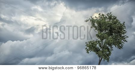 Panoramic View Of Gloomy Sky And Tree