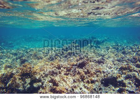 Underwater Coral Reef Background In Caribbean Sea