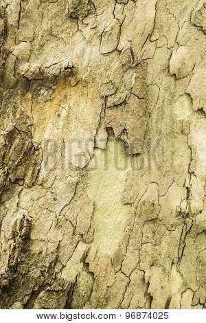 Old Tree Bark