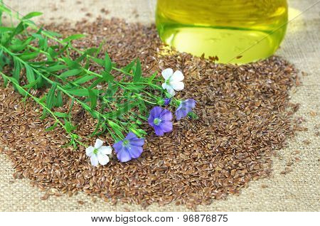 Flax With Blue And White Flowers On Seeds