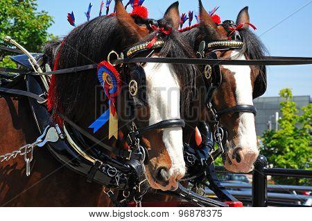 Shire Horses, Liverpool.