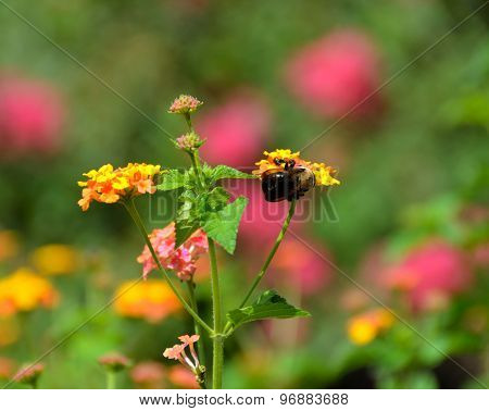 Bumble Bee on top of flowers
