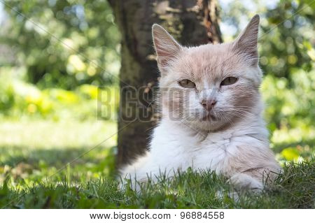 Beautiful Cat Lying In The Grass Hiding From The Summer Heat In The Shade Of A Tree