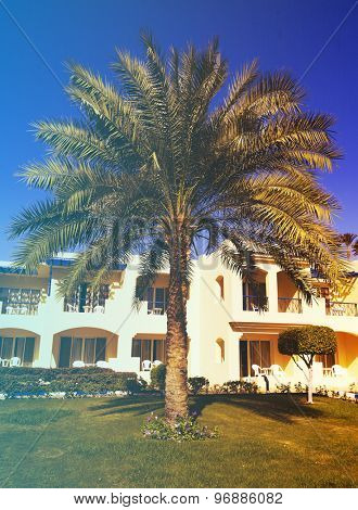 Palms and bungalow in hotel in Sharm el Sheikh, Egypt. Filtered image: vintage effect.